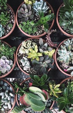 succulents on succulents. | photo by @omjsk