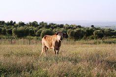 Nuestra ganadería (10)