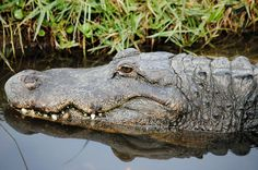 see ya later alligator!