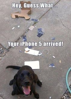 Funny Animal Pictures - View our collection of cute and funny pet videos and pics. New funny animal pictures and videos submitted daily. Memes Humor, Funny Dog Memes, Funny Animal Memes, Cute Funny Animals, Funny Cute, Funny Dogs, Funniest Animals, Funny Sayings, Weird Dogs