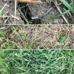 Same soil. Year over year progression. From chemical corn and dead soil to organic perennial grasses and rotational grazing. Nature wants to heal. #holisticmanagement #regenerativeagriculture #vt #farming
