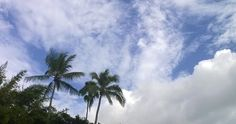 March 5, 2017 Beautiful day in Naples Florida after the hurricane last October.  Garden, Miscellany, Nature, Travel #DailyGratitude, #DailyMeditation, #dailypic, #gratitude, #naturephotography, #nofilter, #travelphotography, Anne Strasser, annestrasser, Clouds, Daily Surprise, Florida, Nokia Lumia 822, Palm Trees, Photography, screensaver