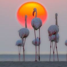 """""""Parks & Wildlife"""" Photo Assignment -- National Geographic Your Shot"""