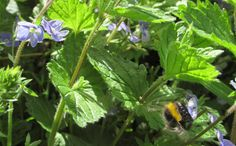 Doodle-Do - Hobbyist, Digital Artist Plant Leaves, Bee, Doodles, Deviantart, Digital, Artist, Plants, Photos, Honey Bees