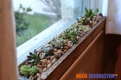 Indoor Gardening Succulent Garden Boxes made from pallets. - I'm loving the newest addition to our indoor gardens: windowsill succulents. On an innocent trip to Lowe's to look at self-watering pots, we were distracted by a cute little potted arr… Diy Garden, Garden Care, Garden Boxes, Garden Plants, Indoor Succulent Garden, Herb Planters, Succulent Ideas, Cactus Planters, Succulent Boxes