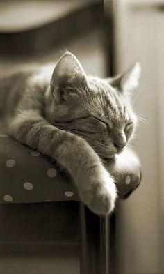 Kitty Sleeps