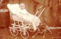 Bulldog, early 1900s