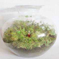 Terrarios que encierran historias... mundos vivos que crecen se re-acomodan  te envuelven y no dejan de sorprender. . . . . . #terrario #terrarios #terrarium #enelbosque #nature #naturelovers #plantslovers #plantas #plants #loveplants #pequeñosmundos #botella #bottle #minimundos #pequeñoshabitantes #homedecor #minimundos #minigarden #minijardin #moss #musgo #green #cristal #glass #handmade #nature #naturelovers #naturaleza #ernestosabato #eltunel