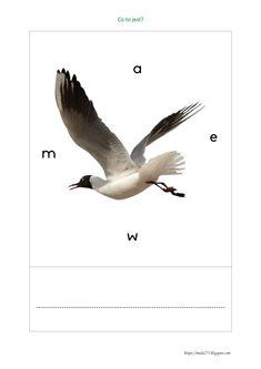 BLOG EDUKACYJNY DLA DZIECI Bird, Animals, Animales, Animaux, Animais, Birds, Animal