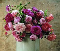 David Austin roses. Fantastische rozen voor een luxe #bruidsboeket.