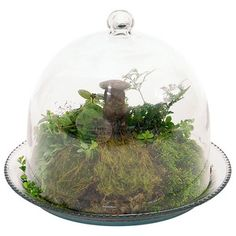 Contemporary Terrariums by ShopLadder