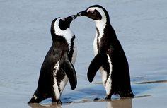 "Penguins make me go ""ahhhh!"""