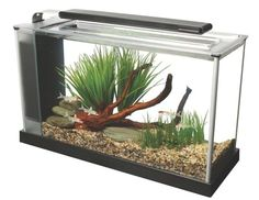 So, you've decided to get into the increasingly popular fish keeping hobby! That's great news, and soon you'll be joining a worldwide club of enthusiasts. But before you begin looking at what fish you're going to buy, you'll need a great aquarium to keep them in. And we have you covered! 15 Gallon Aquarium, Aquarium Setup, Nano Aquarium, Aquarium Design, Marine Aquarium, Aquarium Decorations, Saltwater Aquarium, Aquarium Fish Tank, Planted Aquarium
