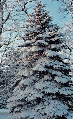 perfect Christmas tree