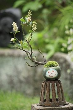 A new trend is here! Tiny trees in your home! Many people know them as bonsai trees. See more bonsai trees at http://www.nurserytreewholesalers.com/