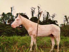 horse on a diet | by audreybrunette  https://www.flickr.com/photos/130294488@N07/ @gentilchien
