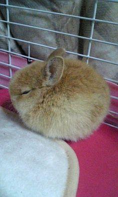 fuzz ball baby bunny @Sadee Hansen we need one!!