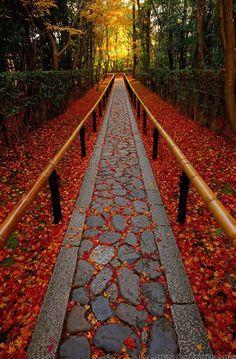 Step into Autumn