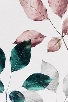 design wallpaper Pink and green leaves with pink square frame, iphone and mobile phone wallpaper Pink And Green Wallpaper, Rose Gold Wallpaper, Iphone Wallpaper Green, Leaves Wallpaper, Cute Wallpapers, Wallpaper Backgrounds, Iphone Wallpapers, Phone Wallpaper Quotes, Backgrounds Free