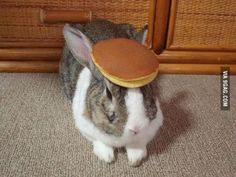 I have no idea what to say so here is a rabbit with a pancake on its head