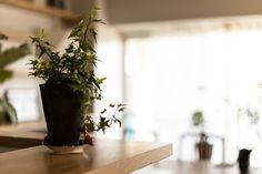 【EcoDecoスタッフ岡野の自邸リノベーション】キッチンカウンターに置かれている植物のそばで、土偶を発見(笑)。#キッチンカウンター #観葉植物 #雑貨 #EcoDeco #エコデコ #インテリア #リノベーション #renovation #東京 #福岡 #福岡リノベーション #福岡設計事務所 Planter Pots