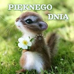Good Morning, Humor, Nature, Blog, Quotes, Funny, Polish, Buen Dia, Cheer