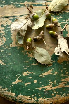 Still life of acorns and leaves on a weathered stool
