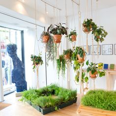 Not sure why we would so this but think it looks amazing! so had to pin it :-) Window Plants, Hanging Plants, Shop Interior Design, House Design, Shop Plans, Edible Garden, Apartment Interior, Houseplants, Vintage Shops