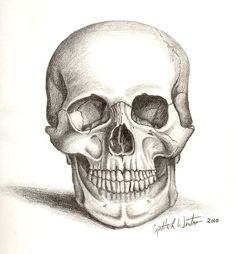 A; Skull Art by ~cynart123 on deviantART