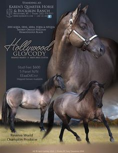 Be sure to see this handsome stallion if you're looking to breed your mare and create your dream foal!