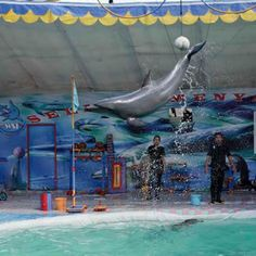 PETITION, PLEASE SIGN AND SHARE! Minister shuts down dolphin attractions but dolphins remain in travelling circuses In February 2013 amid mounting public pressure, including a letter...