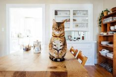 If you have a cat at home you know that they have a mind of their own. Training a cat is nothing like teaching a dog how to behave. If you want to reinforce or stop certain behaviors, you'll have to outsmart your cat. This is especially important in rooms that pose risks to your […] The post How To Keep Your Cat Off The Counter + Other Kitchen Safety Tips appeared first on The Catington Post.