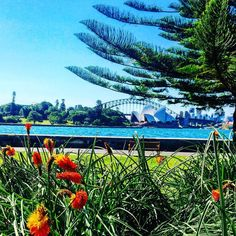 The Beautiful Sydney Harbour Bridge and Opera house from the Botanical Gardens!!.... Loved this View!!!  #sydney#sydneyharbourbridge#operahouse#botanicalgardens by leahthomas246 http://ift.tt/1NRMbNv