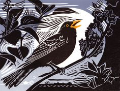 Pam Grimmonf. Blackbird. Linocut.