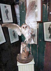 Antique Taxidermy, Birds