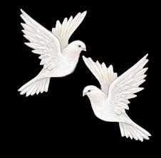 49 Fantastiche Immagini Su Colombe Bianche Beautiful Birds Birds