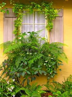 A great idea for a shady side of the house. Flowers require lots of sun to flower nicely but using shade-loving plants in a window box works well.  Adding coleus, with their patterned coloured leaves plus something like impatient would add more colour too.