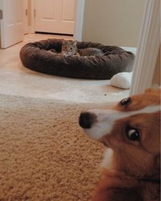 """""""Aww, he looks so sad. I'll try not to laugh too hard as I get fur all over his bed."""" 