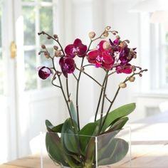 tipps-orchideen-pflege-wurzeln-durchsichtige-kunststoff-behaelter-quadrat