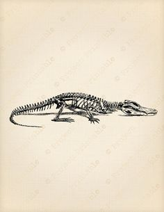 Printable Digital Image Crocodile SKELETON by ProjectPrintable