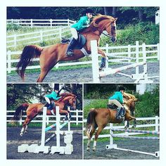 Practising hard #horses #horse #horsesofinstagram #instahorse #instagramhorses #instapet #petsofinstagram #petoftheday #instagrampets #equestrian #equestrianlife #horsebackriding #horseriding #horselessons #arabcross #hanovarian