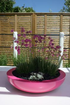 Wide Pink Planter _ Created in the environment by Matthew Childs