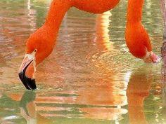 Orange 1.pps