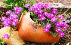 Dicas para cuidar do seu jardim   Gramas e Gramados
