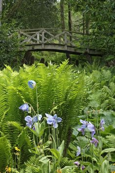'Footbridge and ferns' at Aberglasney House and Gardens, Llangathen, Carmarthenshire. 'A garden lost in time'