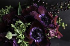 https://flic.kr/p/brFtfg | V IS FOR VIOLET | I saw these anemones today and it was like a cartoon--imagine tennis shoes screeching and burnt rubber billowing from my soles. I never spend more than $5 on flowers (we are saving for a house). I tentatively asked the price from the flower dealer and I smiled like a Lotto winner. They are like velvet, so stunning!  manual | 50mm prime | f/ 3.2 | 1/100 | 400 iso  I had beat up black cardstock behind and under, with East facing window light to the…