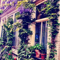 Cute little house in #amsterdam This is a geveltuintje people make a little garden at the front from the house and sit on the street verry normal in Amsterdam Jordaan / Centra