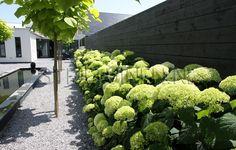 tijdloze-tuin-bij-moderne-woning-villa-strakke-villa-hortensia-s-zwarte-schuttingen-catalpas-spiegelvijver-antraciet-split-bomenrij-erik-van-gelder-stijltuinen-luxe-villatuin.jpg (1150×732)