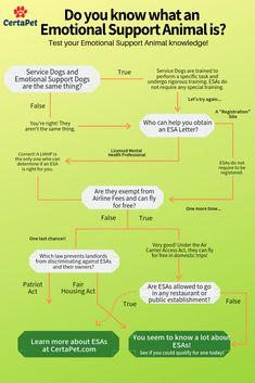 Important Training Your Dog Information That Anyone Can Use Dog Training Bells, Agility Training For Dogs, Dog Training Treats, Dog Training Classes, Training Your Dog, Training Tips, Training Collar, Dog Agility, Training Equipment