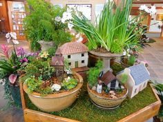Fairy Garden in large pot with bird house and plants